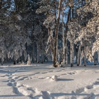 Зима :: Анатолий Соляненко
