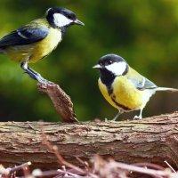 Птичьи посиделки ..... :: Aleks Ben Israel