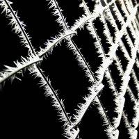 мороз :: Дмитрий Крестоварт