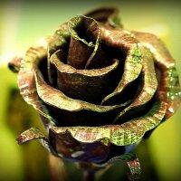 роза в художественном исполнении :: Олег Лукьянов