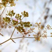Ну почему, почему, почему  укроп в декабре зелёный?:) :: Андрей Заломленков