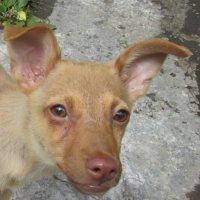 Любопытный щенок :: Galaelina ***