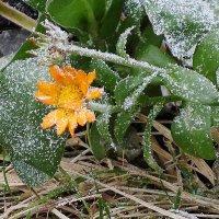 И в декабре цветут цветы :: Маргарита Батырева