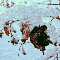 Пушистый снег. :: Farin Алёна