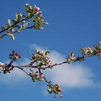 """""""Почему длится долго зима и так быстро проходит весна?"""" :: Фотогруппа Весна."""