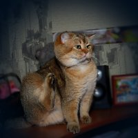 Котэ приветствует тебя о приходящая Собака! :: Владимир Куликов