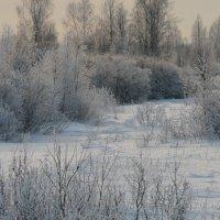Лес зимой :: рыба на лошади
