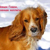 С Новым Годом!! :: Михаил Баевский