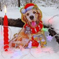 Желаю всем в новом году чтоб цены не сильно кусались!:) :: Андрей Заломленков