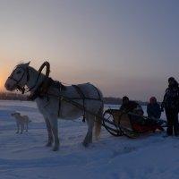 новый  год  пришел :: Владимир Коваленко