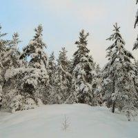 Карельская зима :: Анна Азарёнок