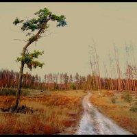 Лес после пожара-1 :: Павел Попов