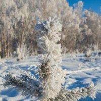Зимний лес :: Сергей Зырянов