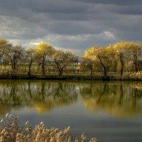 Студеная вода деревьев отражение целует!... :: Александр Сыроватка