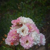 Розовый букет - из лета привет.. :: Андрей Нибылица