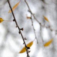 штрихи осени :: Бармалей ин юэй