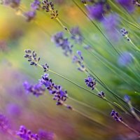 полевые цветы. :: Van Dok
