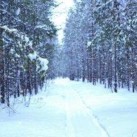 Прогулка в лесу :: Вероника