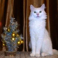 Кот и елочка :: Елена Грошева