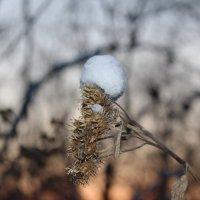 принарядился к зиме :: Марина Белоусова