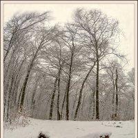 Зима в лесу. :: Юрий Гординский