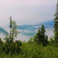 Утром, горы ещё в тумане :: Сергей Чиняев