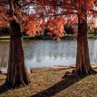 США. Осень :: Viacheslav