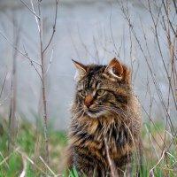 Кот Яша , медитирующий в туманной дымке . :: Иван