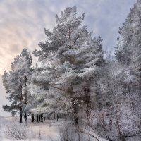 Зимний сон :: Владимир Шамота