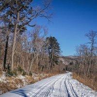Приморский лес :: Эдуард Куклин