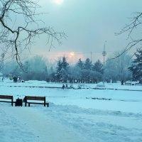 В городском парке. :: Наталья Тимофеева