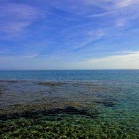 Вблизи кораллового рифа... :: Sergey Gordoff