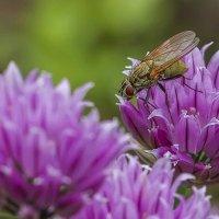 И что здесь пчёл привлекает? Не пойму :: leo yagonen
