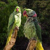 Попугай :: Nn semonov_nn