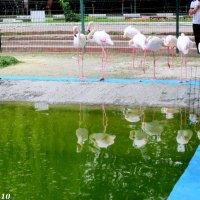Пруд на птичьей площадке :: Нина Бутко