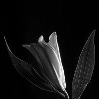 цветок :: Мария Царькова