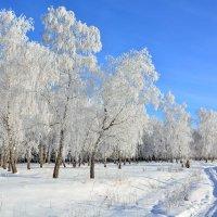 Зима  в  пригороде :: Геннадий С.