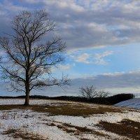 Декабрь,где снег? :: Марина Елизарьева