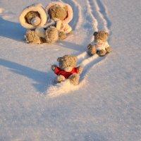 Веселое медвежье семейство :: Наталья Жукова