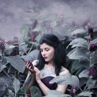 Волчьи ягоды. :: Ирина Голубятникова