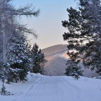 Январский лес :: Татьяна Соловьева