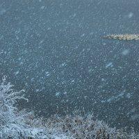 Снегопад и гуси :: Фёдор. Лашков