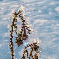 Зимние цветы :: Татьяна Губина