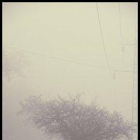 Ёжик в тумане. :: Сергей Зенцев
