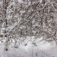 И выпал снег.. :: Юрий Стародубцев
