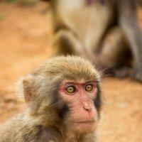 Зоопарк на Хайнане :: Tiana Ros