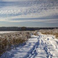 Зима... :: Cергей Павлович