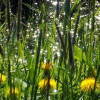 Начало  бесконечного лета :: Фотогруппа Весна.