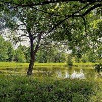 В тени старинного пруда... :: Sergey Gordoff