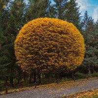Осенняя геометрия :: Андрей Нибылица